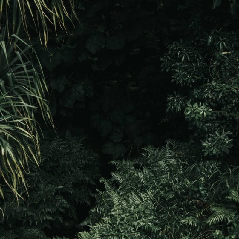 Deep Forest Amazon Life