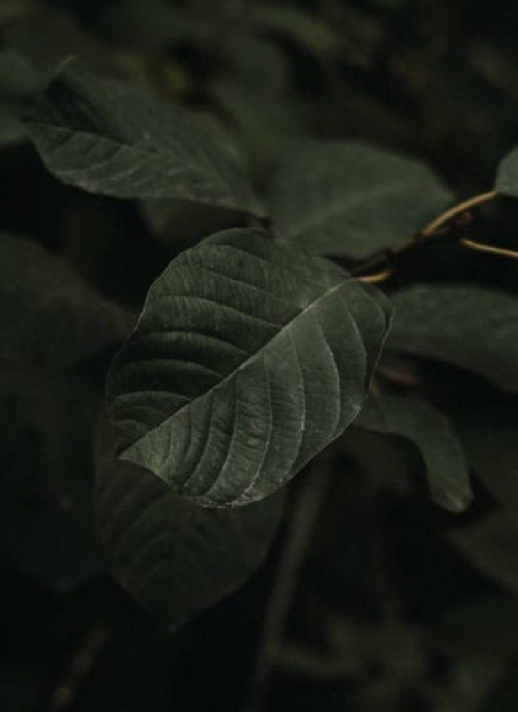 Perfect Macro Green Leaves