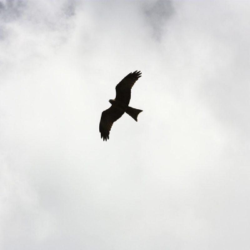 Minimal Black Crow