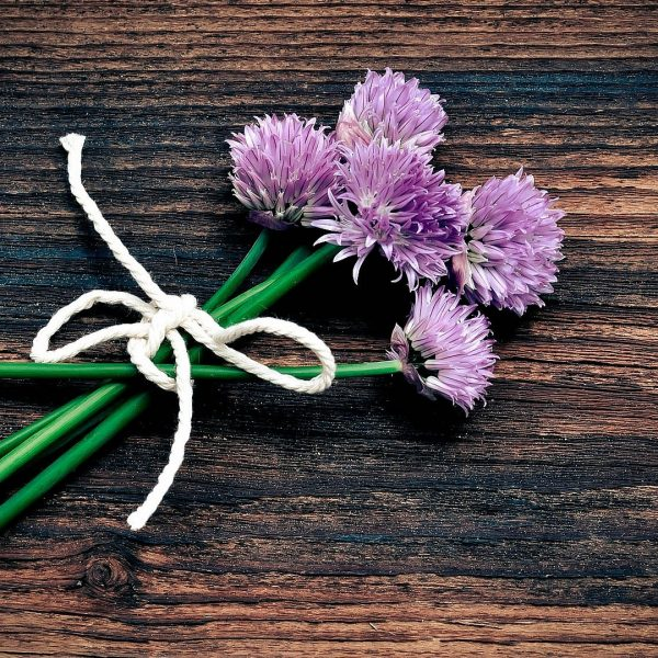 Chive Flower Blossom